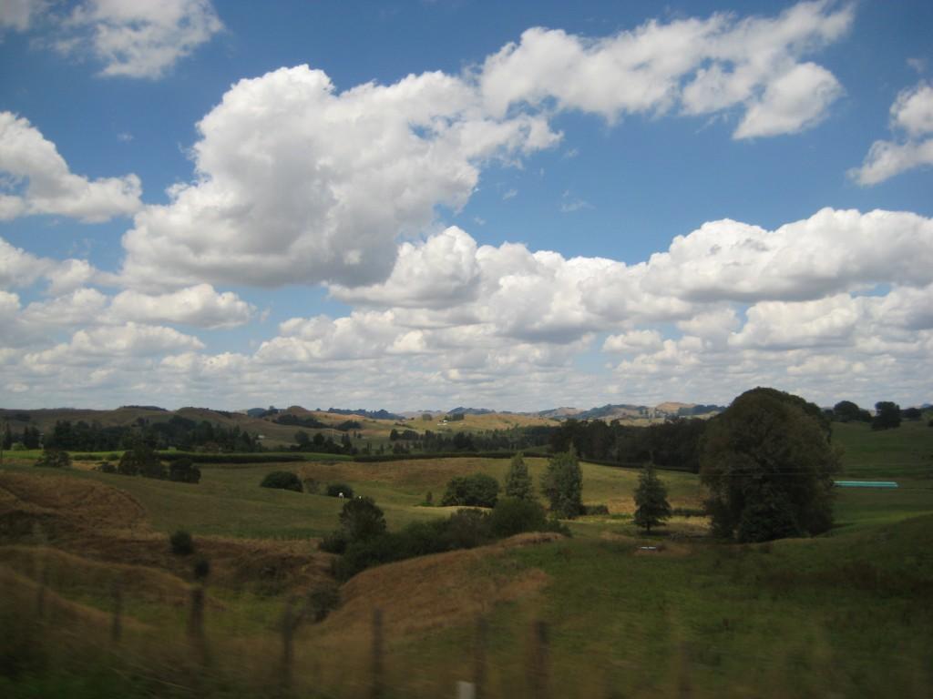 Tauranga Landscape