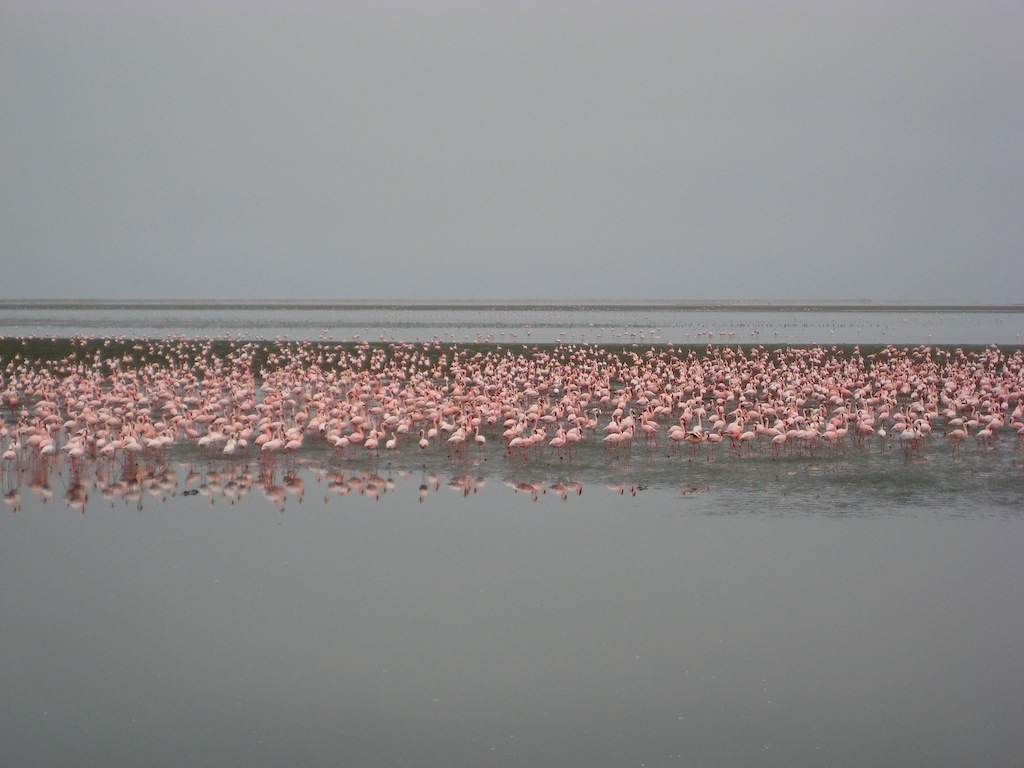Miles of Flamingos