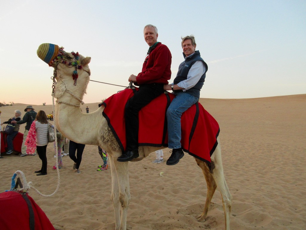Dubai Camel Ride